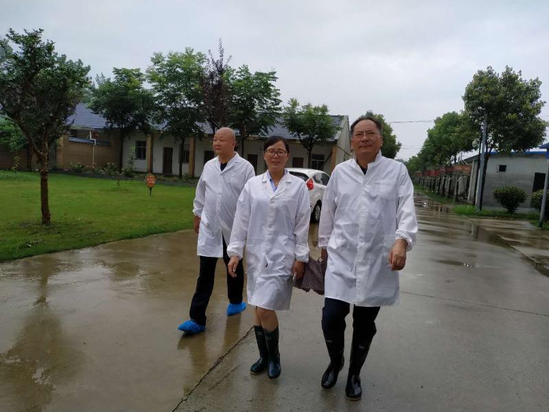 陆应平检查指导防汛排涝应急工作
